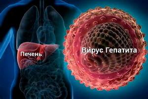 Признаки и симптомы заражения гепатитом С