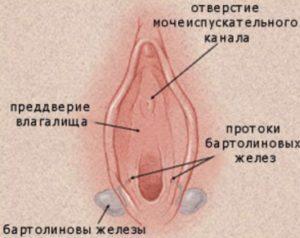 Причины и симптомы возникновения бартолинита у женщин