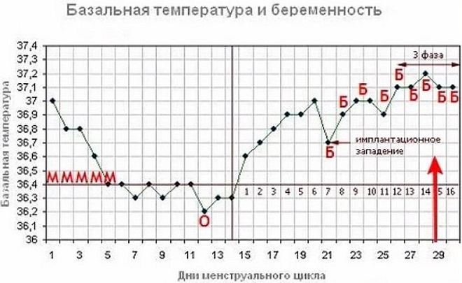 Определение базальной температуры