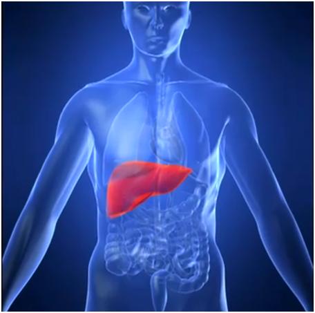 Сколько живут люди с диагнозом «Гепатит С»?