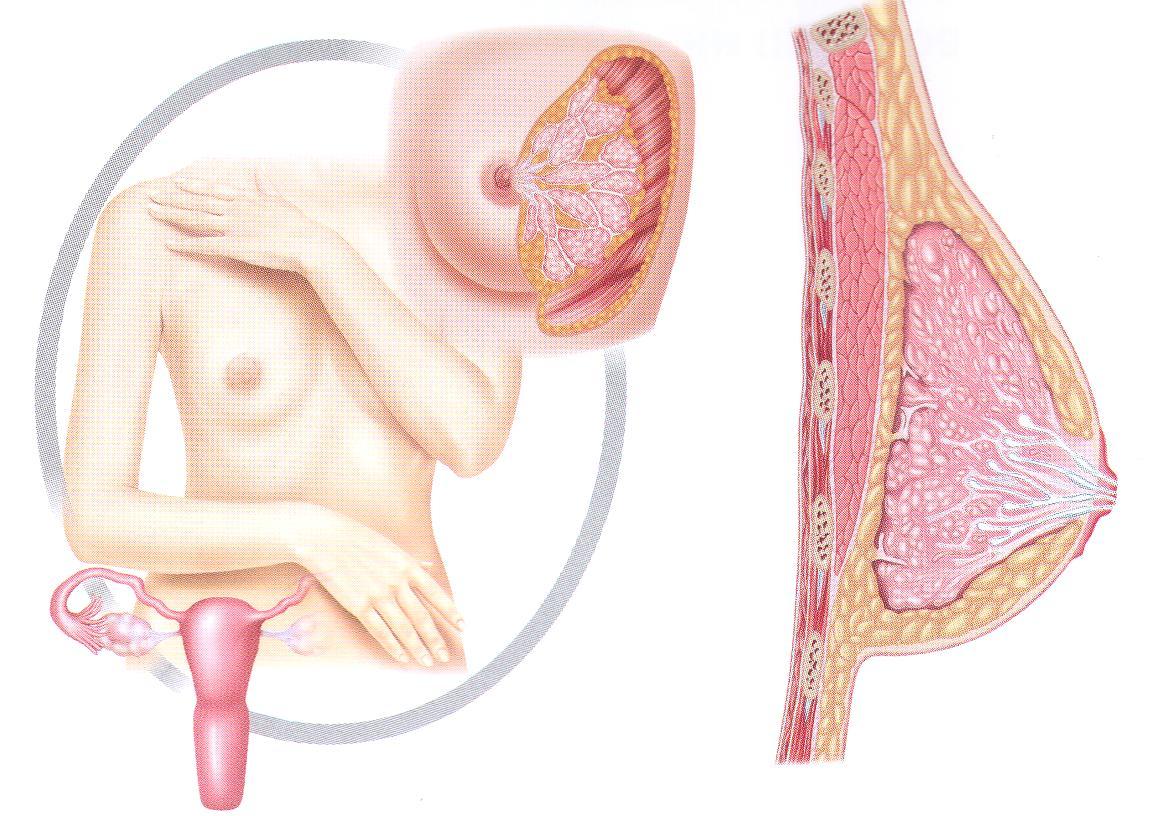 Как проявляется фиброзно-кистозная мастопатия молочных желез, как ее лечить?