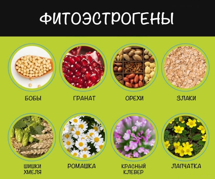 Какие продукты и травы относятся к фитоэстрогенам