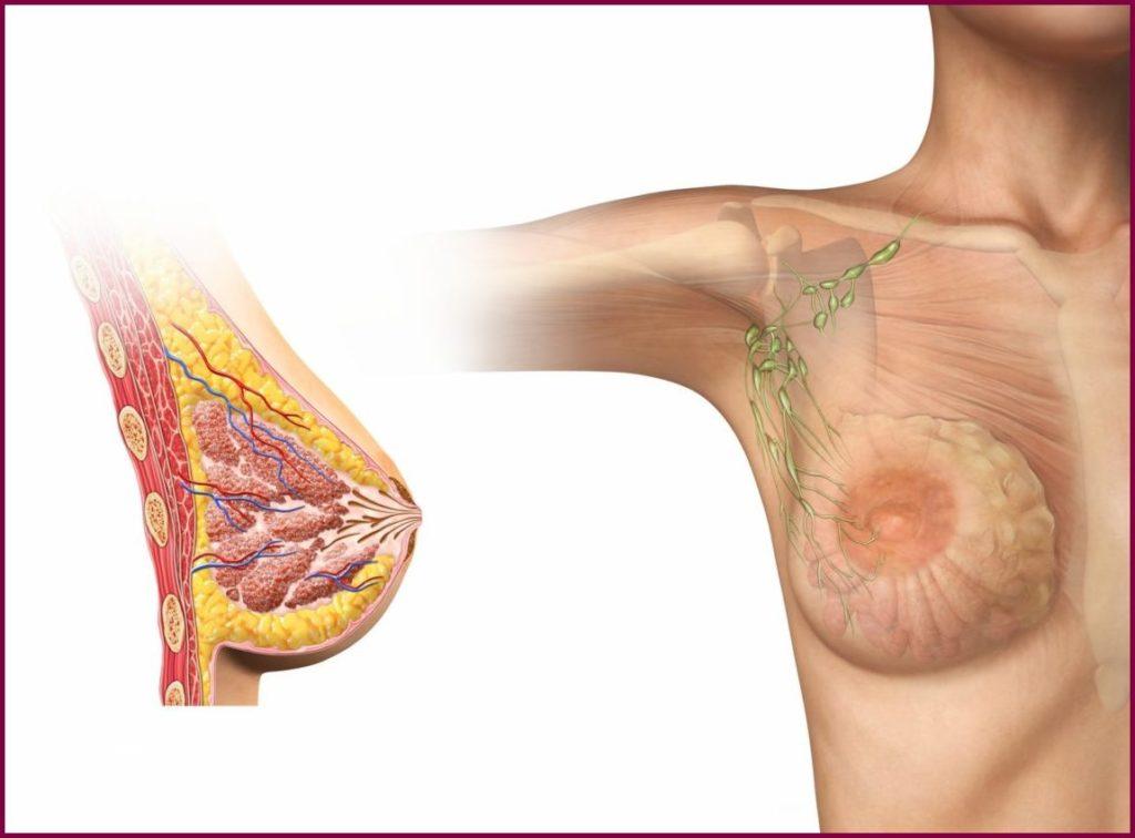 маммография фиброзно жировая инволюция